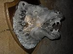 Bust Glass - Large glass wall lamp -The head of a growling bear-.