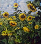 Yuri Kliapko - Sunflowers